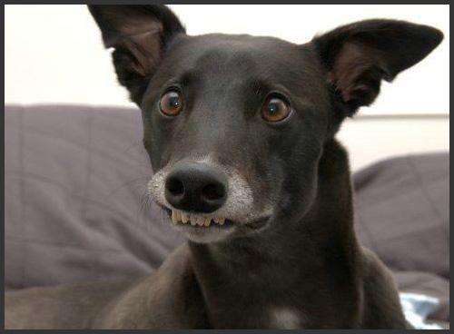 http://www.mrdiggles.com/img/funny-dog.jpg